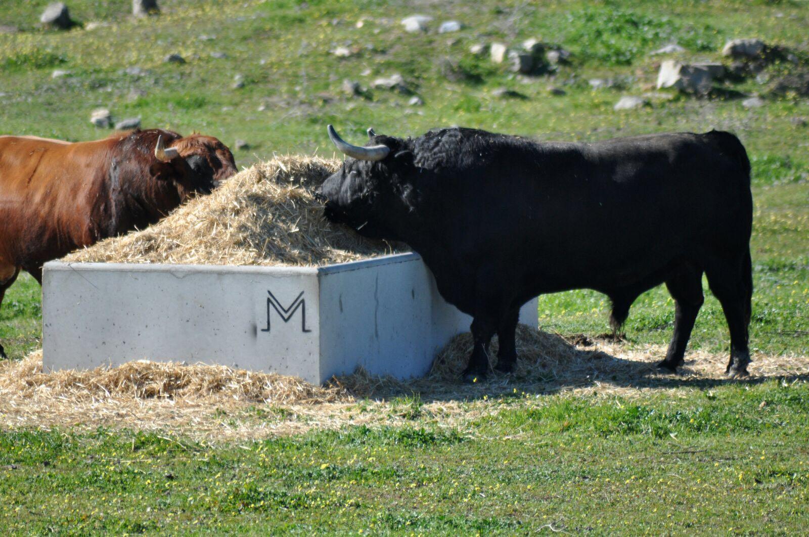 Pajeros de hormigón armados y vibrados, e irrompibles por el ganado, pero totalmente movibles | para ganado
